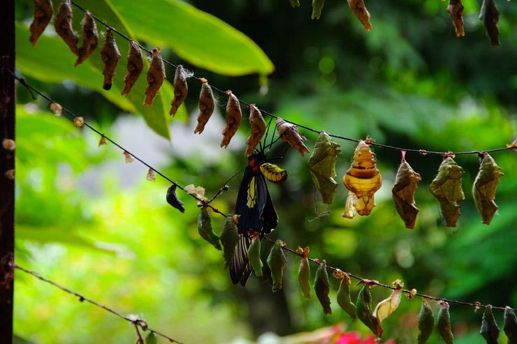 パワランのバタフライ エコ ガーデン