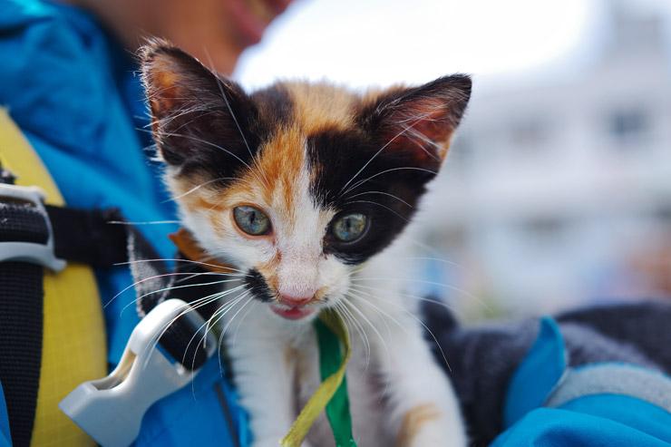 生後数ヶ月のネコ