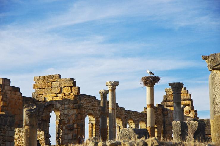 世界遺産『ヴォルビリスの古代遺跡』 | モロッコにあるローマ遺跡