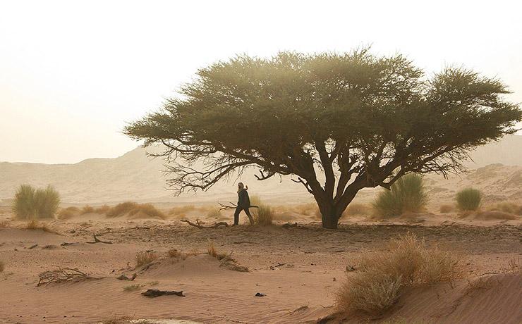 アルジェリアの世界遺産、一覧