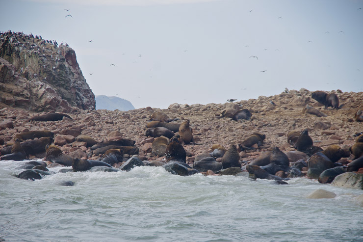 パラカスにあるリトルガラパゴス『バジェスタ諸島』