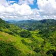 フィリピン・コルディリェーラの棚田群 | バナウェにある天国への階段と呼ばれる世界遺産