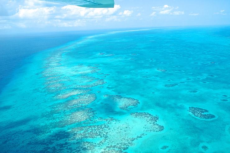ベリーズ珊瑚礁保護区