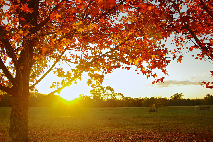 オーストラリアの紅葉