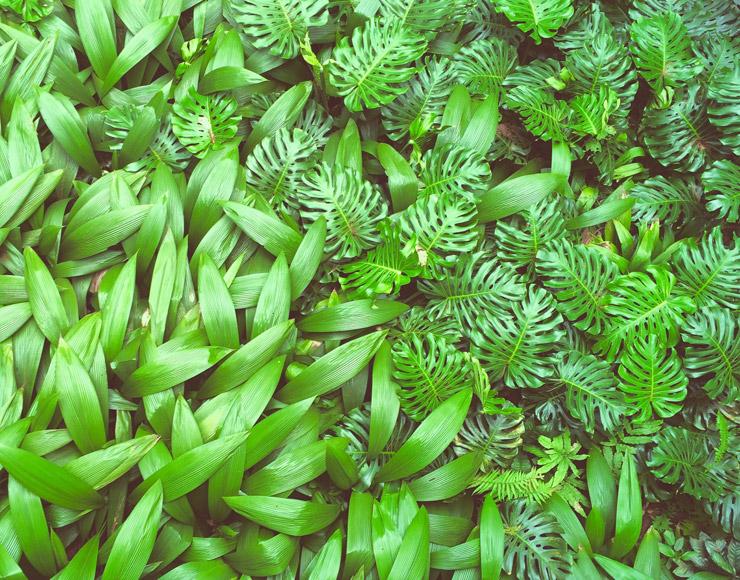 シンガポール植物園(Singapore Botanic Gardens)| 世界遺産
