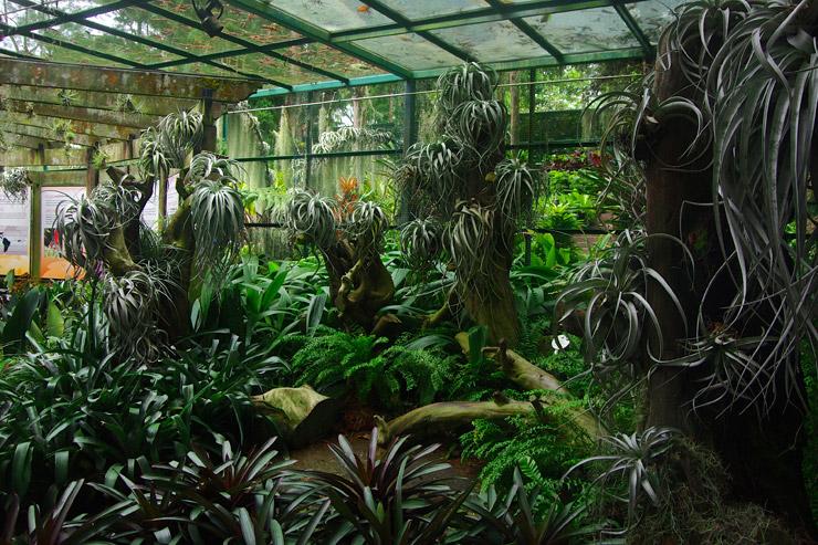 シンガポール植物園(Singapore Botanic Gardens)