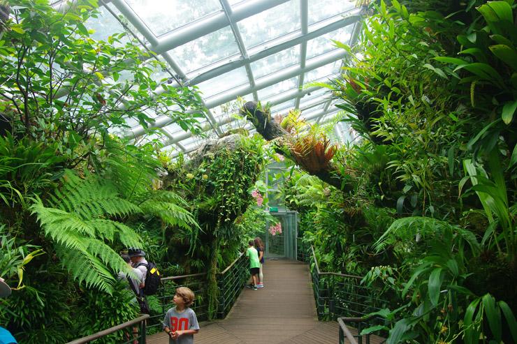 シンガポール植物園の画像 p1_18