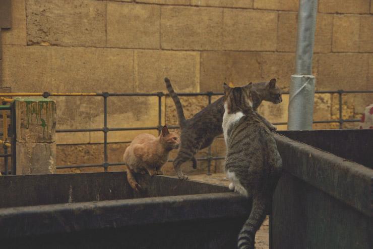 カイロのネコ