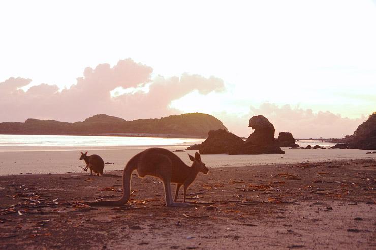 カンガルービーチ | Cape Hillsborough