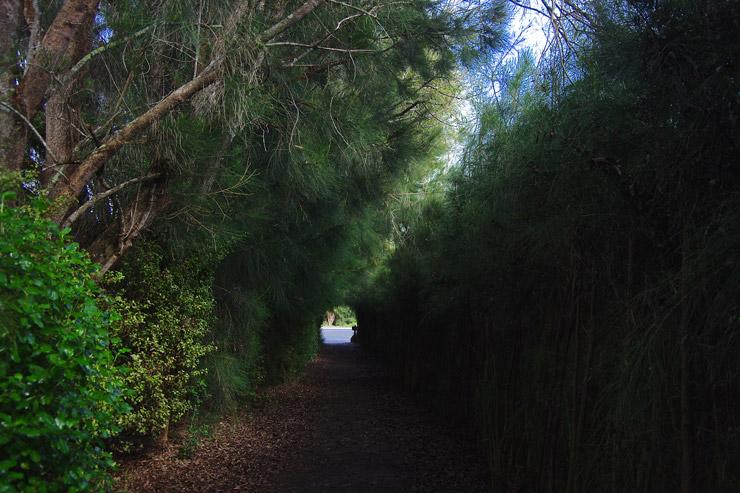 木のトンネル