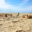 黄色い硫黄泉がわき出す泉と塩のキャラバン | ダナキル砂漠ツアー03