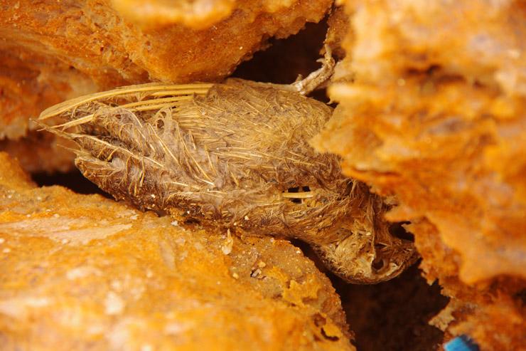 硫黄泉、鳥の死骸