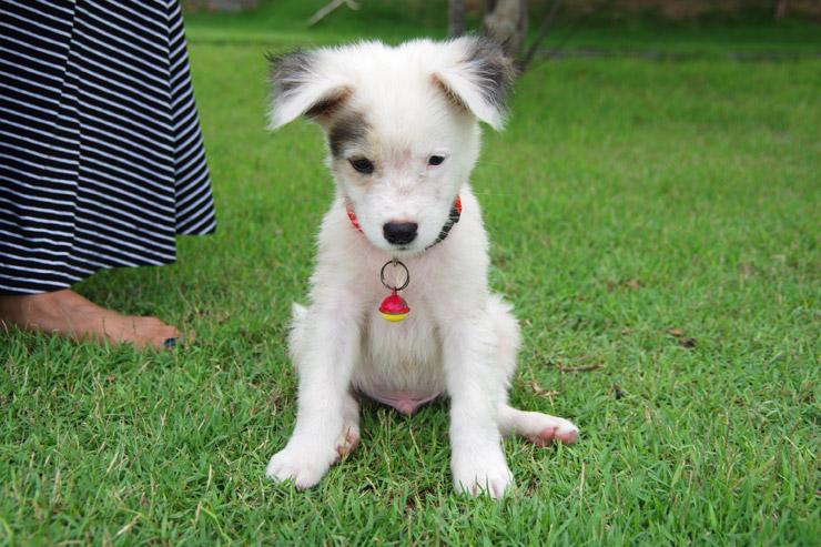 フィリピンのめちゃくちゃ可愛い子犬