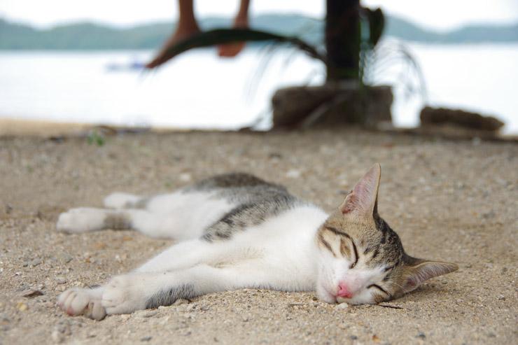 サンドビーチに居た子猫