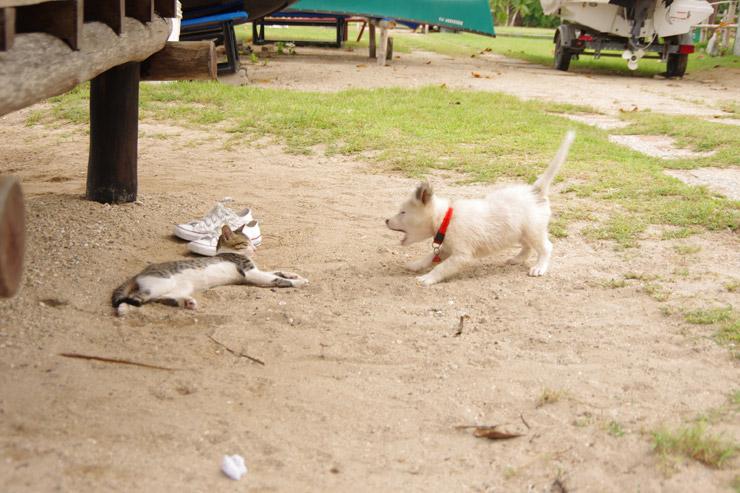 子犬の威嚇とか無視な子猫