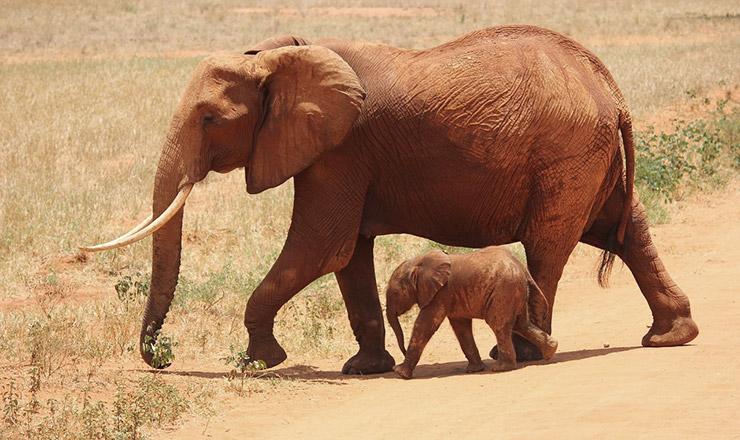 ケニアの世界遺産、一覧
