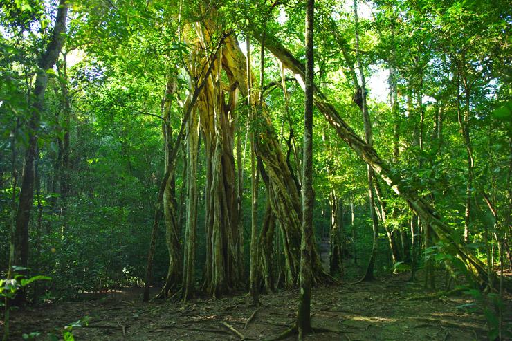 ジャングルの木々