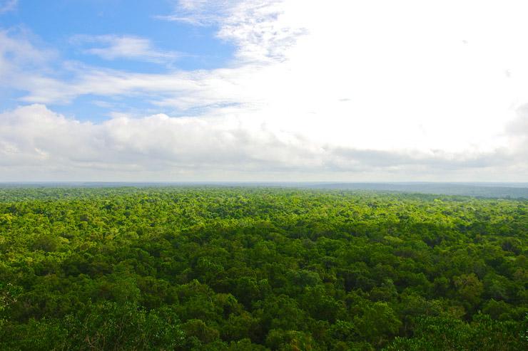 エル・ミラドールから見下ろす森の海