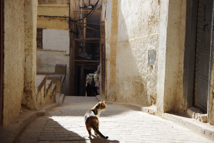 モロッコのネコ