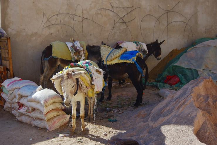 モロッコの物流は今でもロバが主役