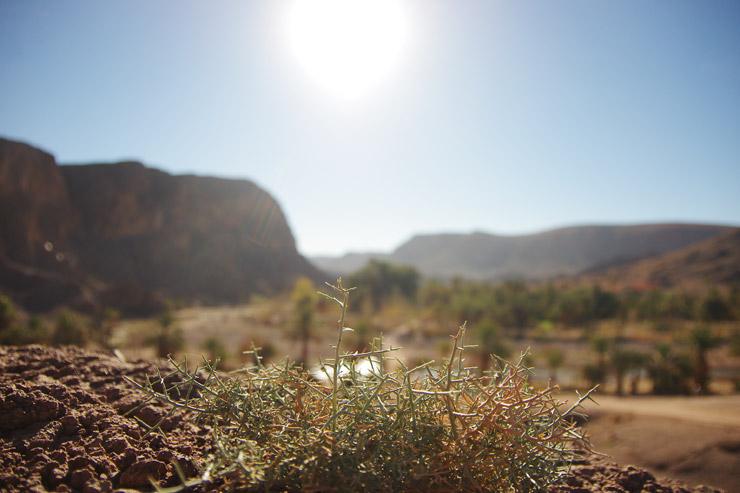 モロッコの植物
