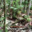 世界一おおきな砂の島『フレーザー島』 | オーストラリアの世界遺産