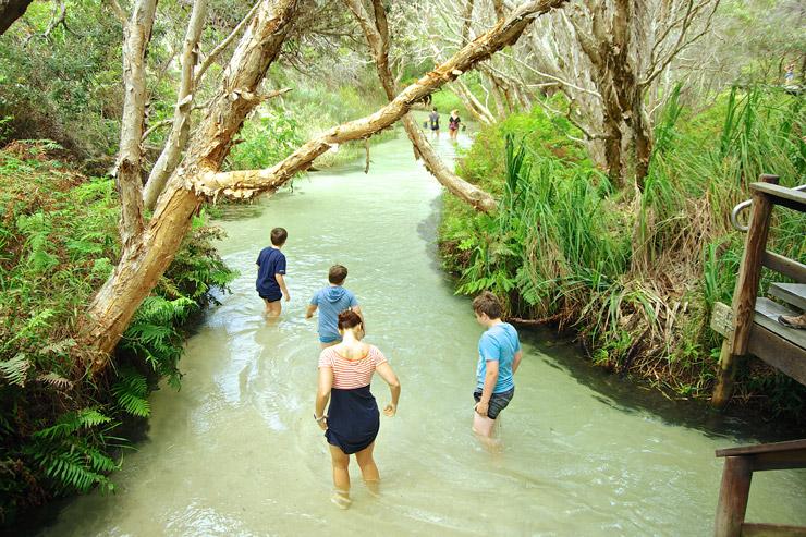 Eli Creek(イーライ クリーク)