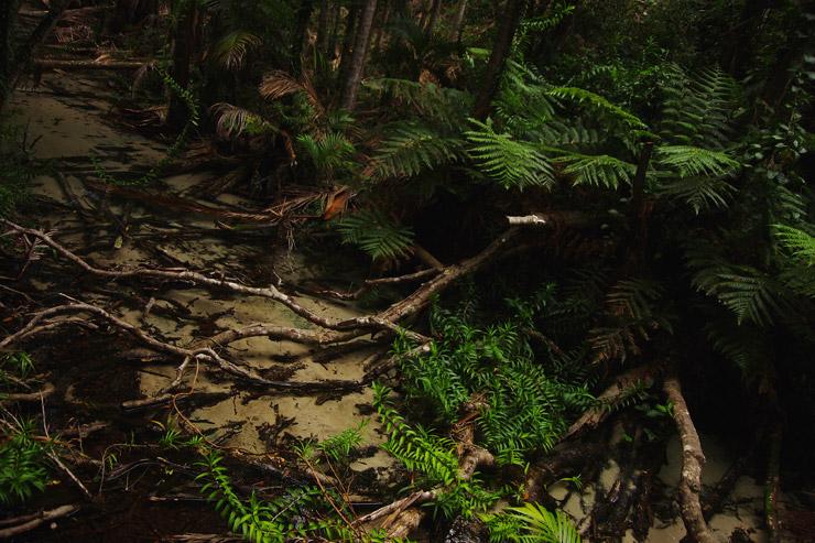 フレーザー島でジャングルトレッキング
