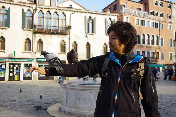 ベネツィアのハト