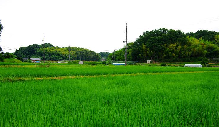 法起寺近辺の風景