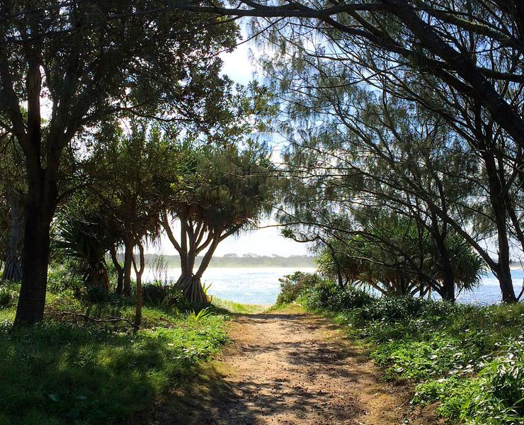 トトロの森みたいなイルカ自然保護区 | 世界遺産『オーストラリアのゴンドワナ雨林』