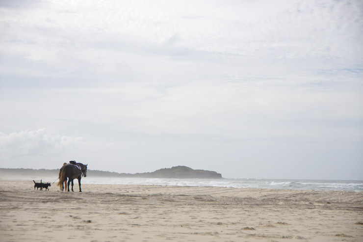 ビーチにいた馬