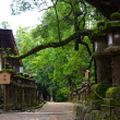 若宮神社付近に生えていた大木