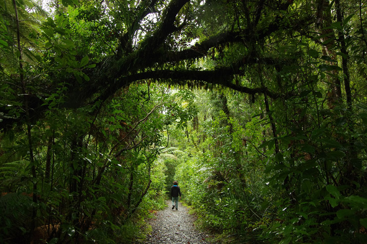 森の神がいるカウリ・コースト