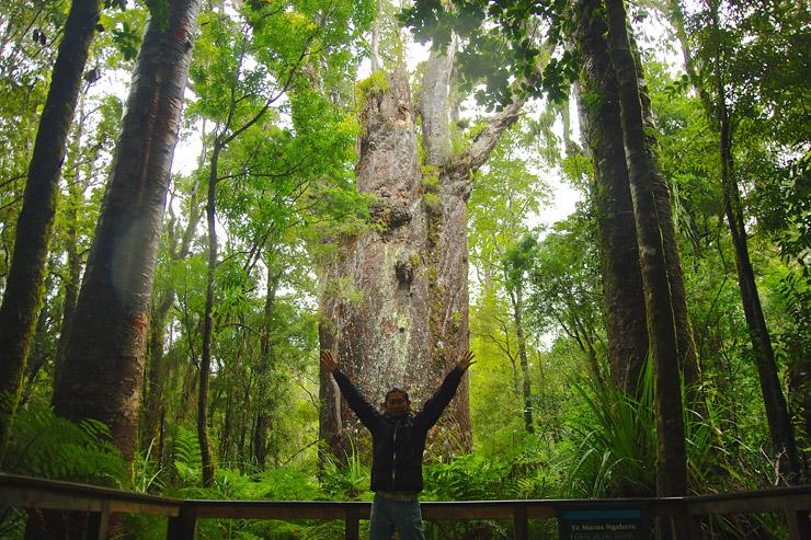 森の父と言われるテ・マトゥア・ナヘレ(Te Matua Ngahere)