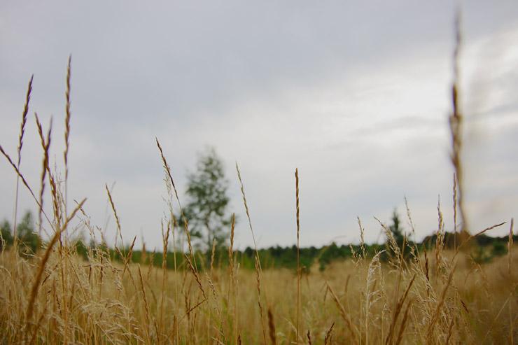 クルシュー砂州 | ロシアとリトアニアをまたぐ世界遺産