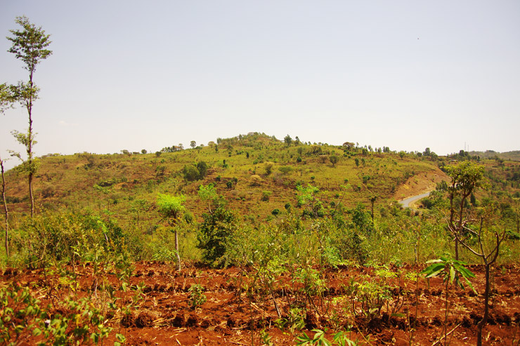 コンソの段畑