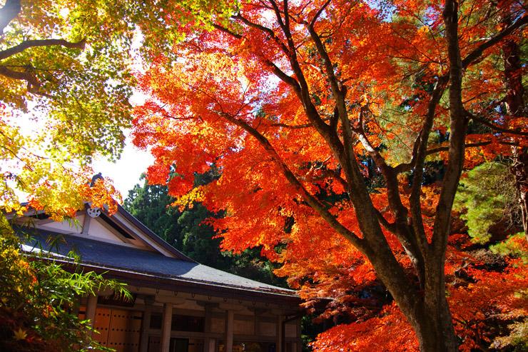 平泉の紅葉写真