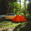 世界遺産『クインズランドの湿潤熱帯地域』をレンタカーで巡る旅