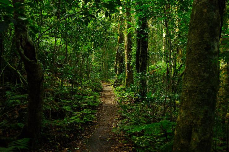 ラミントン国立公園(Lamington National Park)