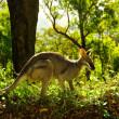世界遺産『オーストラリアのゴンドワナ雨林』| ラミントン国立公園とスプリングブルック国立公園