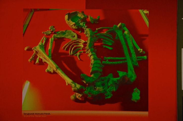 東南アジアで最古の完全な人骨(ペラ・マン/約100万年前)