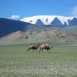 モンゴルの世界遺産一覧