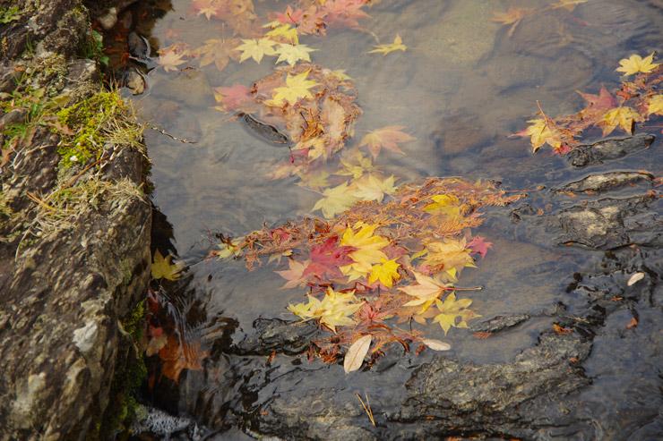 遣水に溜まる落ち葉