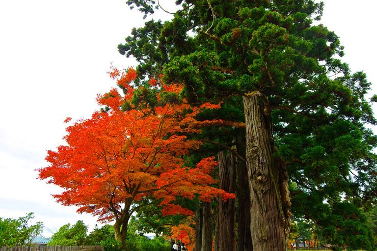 毛越寺の紅葉写真