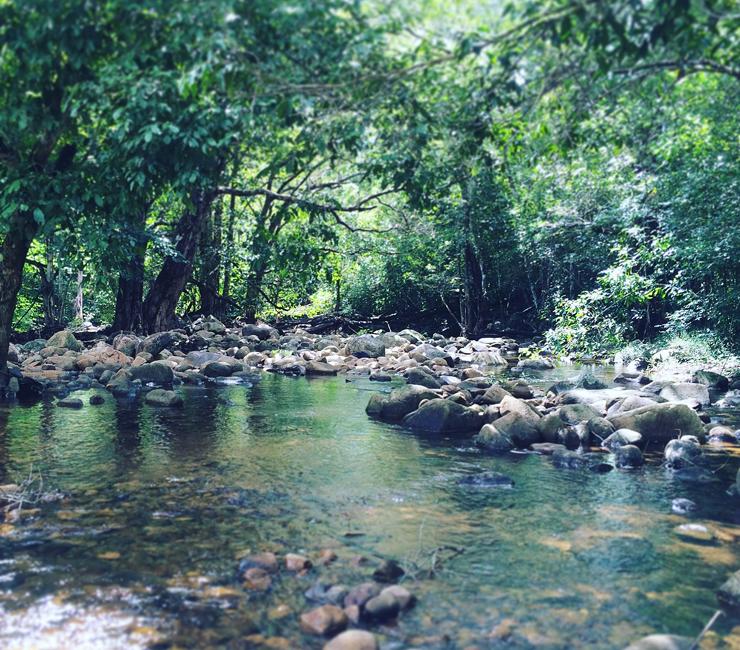 世界遺産『クインズランドの湿潤熱帯地域』