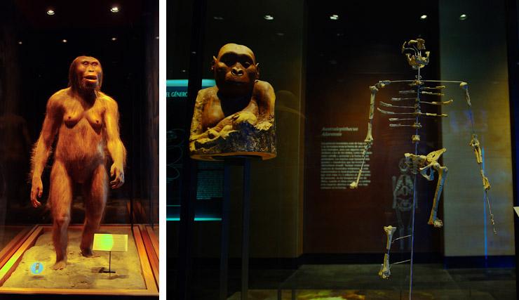 ルーシー メキシコ国立人類学博物館