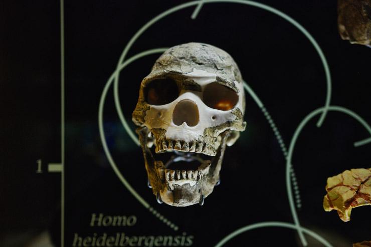 メキシコ国立人類学博物館 | 人類学入門