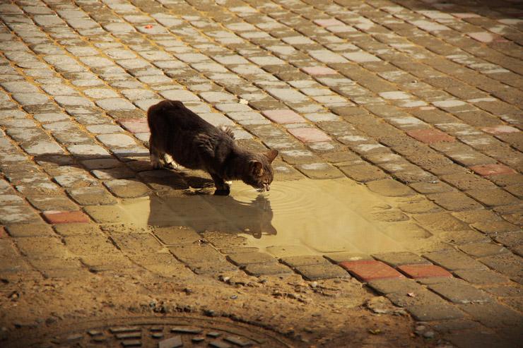 モロッコの子猫