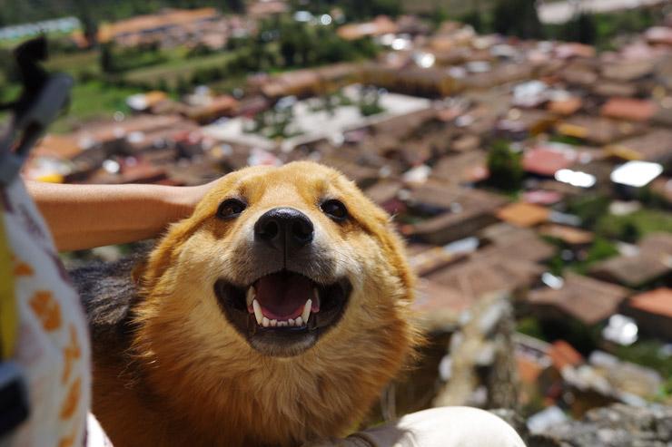 人懐っこい犬